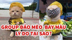 Đảo Mèo, Group facebook lớn nhất Việt Nam dành cho người yêu động vật đã bị bay màu sáng qua.