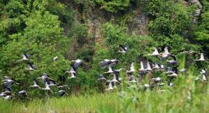 Khái niệm sinh quyển và các khu dự trữ sinh quyển nổi tiếng